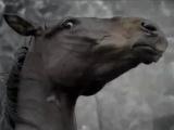 Tatra - ungestümes Pferd
